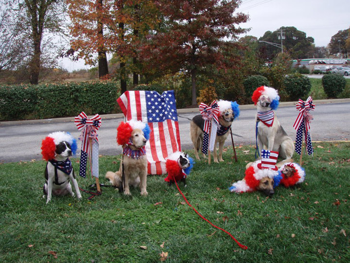 Veterinary Fourth of July Pet Photos