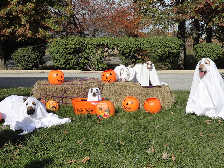 Veterinary Halloween Pet Photos